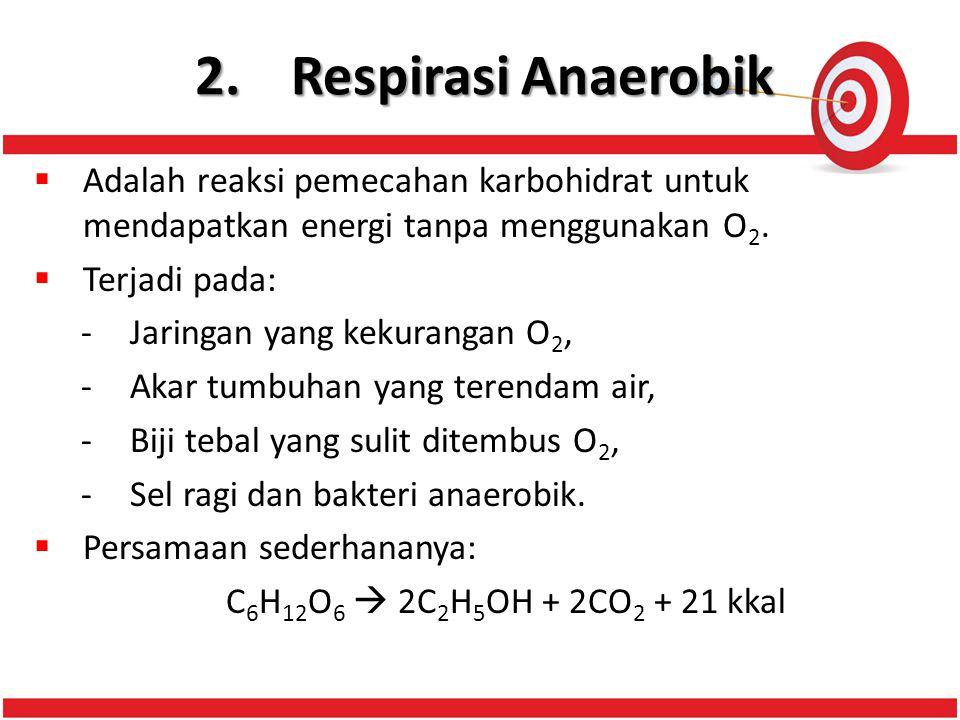 2.Respirasi Anaerobik  Adalah reaksi pemecahan karbohidrat untuk mendapatkan energi tanpa menggunakan O 2.