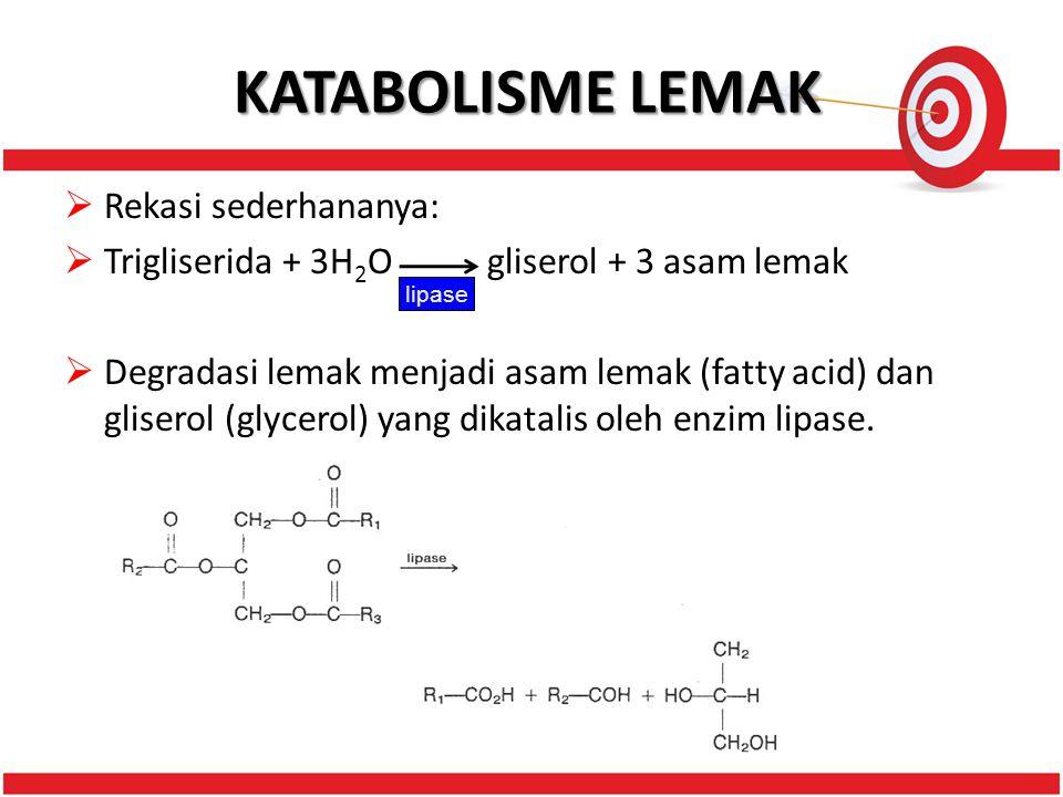 KATABOLISME LEMAK  Rekasi sederhananya:  Trigliserida + 3H 2 O gliserol + 3 asam lemak  Degradasi lemak menjadi asam lemak (fatty acid) dan gliserol (glycerol) yang dikatalis oleh enzim lipase.