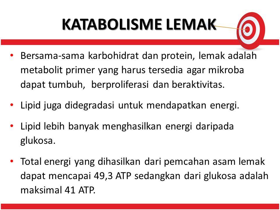 KATABOLISME LEMAK Bersama-sama karbohidrat dan protein, lemak adalah metabolit primer yang harus tersedia agar mikroba dapat tumbuh, berproliferasi dan beraktivitas.