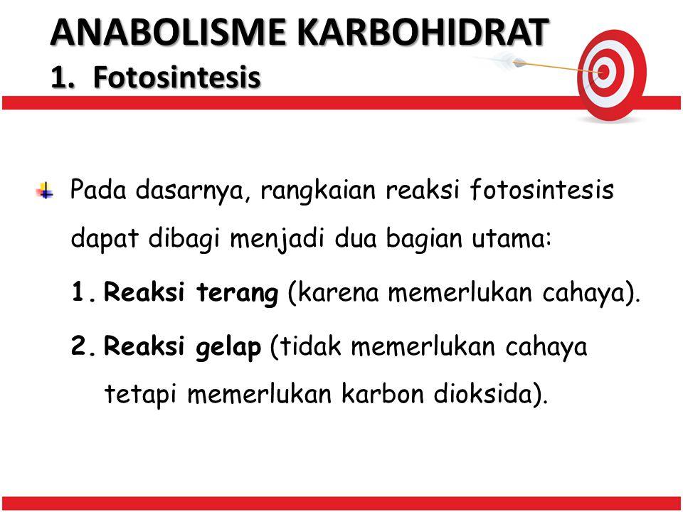 ANABOLISME KARBOHIDRAT 1.Fotosintesis Pada dasarnya, rangkaian reaksi fotosintesis dapat dibagi menjadi dua bagian utama: 1.Reaksi terang (karena memerlukan cahaya).