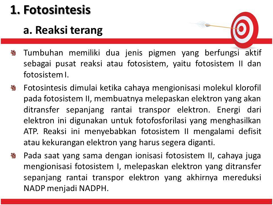 1.Fotosintesis 1.Fotosintesis a.