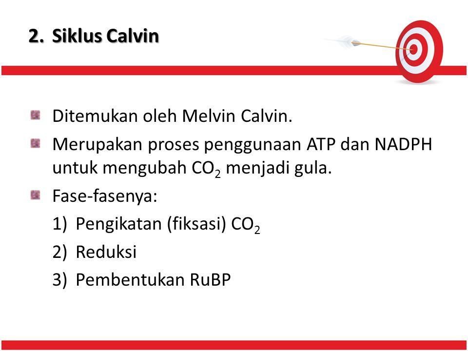 2.Siklus Calvin Ditemukan oleh Melvin Calvin.