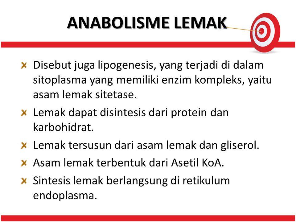 ANABOLISME LEMAK Disebut juga lipogenesis, yang terjadi di dalam sitoplasma yang memiliki enzim kompleks, yaitu asam lemak sitetase.