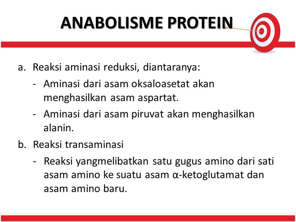 ANABOLISME PROTEIN a.Reaksi aminasi reduksi, diantaranya: -Aminasi dari asam oksaloasetat akan menghasilkan asam aspartat.