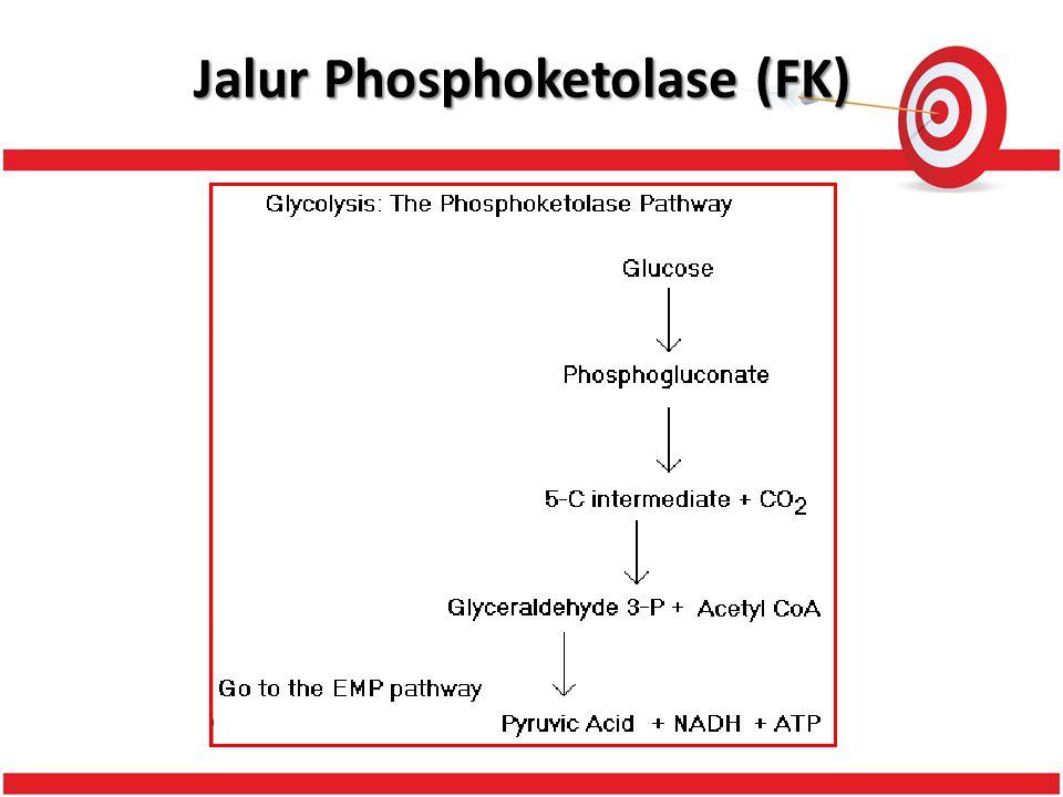 Jalur Phosphoketolase (FK)