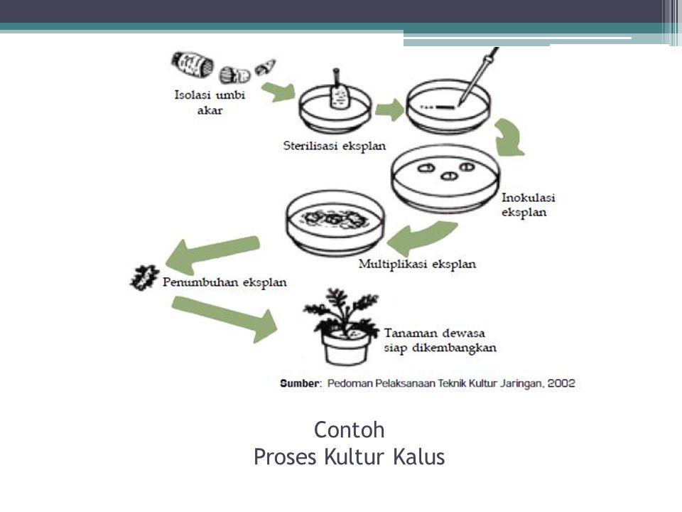 Contoh Proses Kultur Kalus