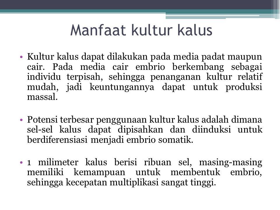 Manfaat kultur kalus Kultur kalus dapat dilakukan pada media padat maupun cair. Pada media cair embrio berkembang sebagai individu terpisah, sehingga