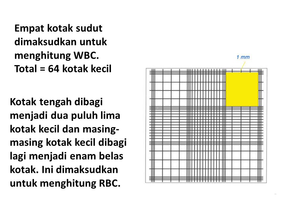 Empat kotak sudut dimaksudkan untuk menghitung WBC. Total = 64 kotak kecil Kotak tengah dibagi menjadi dua puluh lima kotak kecil dan masing- masing k