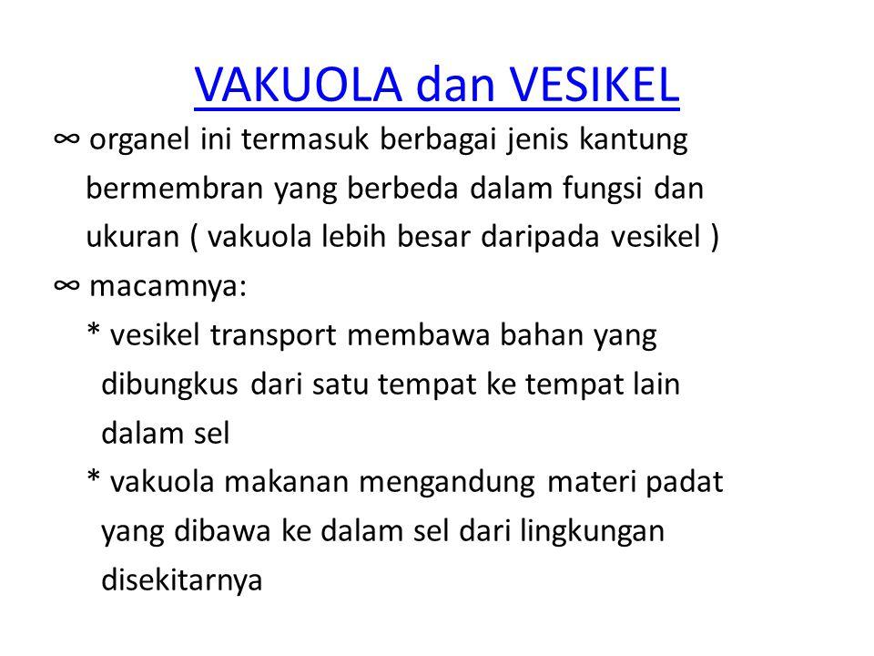 VAKUOLA dan VESIKEL ∞ organel ini termasuk berbagai jenis kantung bermembran yang berbeda dalam fungsi dan ukuran ( vakuola lebih besar daripada vesik