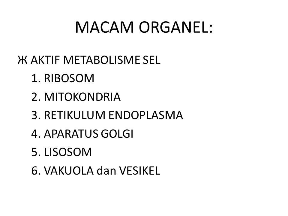 MACAM ORGANEL: Ж AKTIF METABOLISME SEL 1. RIBOSOM 2. MITOKONDRIA 3. RETIKULUM ENDOPLASMA 4. APARATUS GOLGI 5. LISOSOM 6. VAKUOLA dan VESIKEL