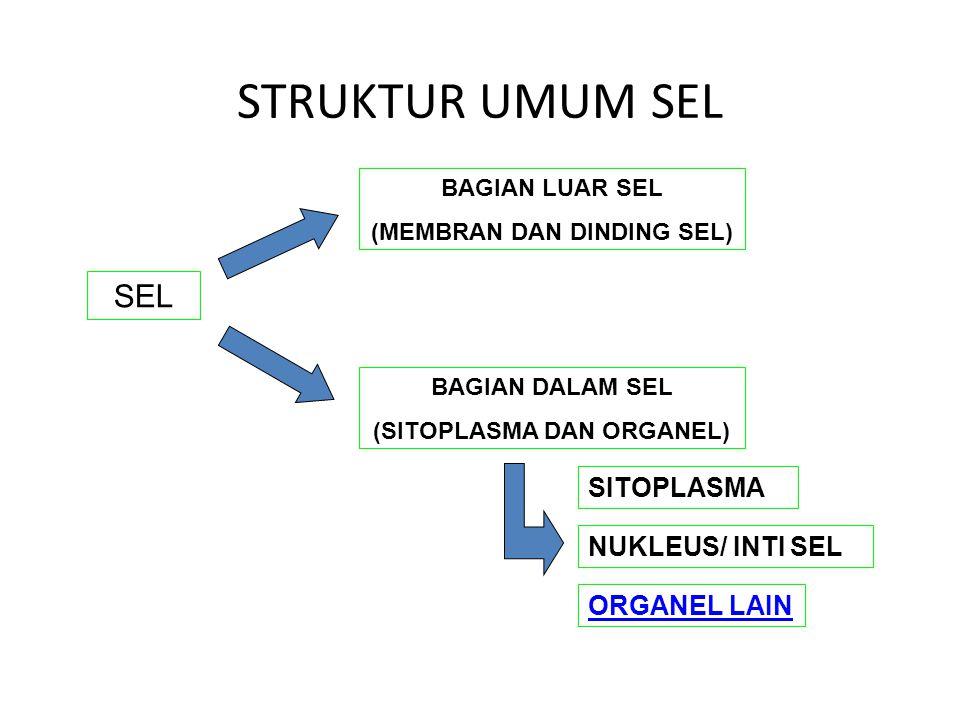 STRUKTUR UMUM SEL SEL BAGIAN LUAR SEL (MEMBRAN DAN DINDING SEL) SITOPLASMA NUKLEUS/ INTI SEL BAGIAN DALAM SEL (SITOPLASMA DAN ORGANEL) ORGANEL LAIN