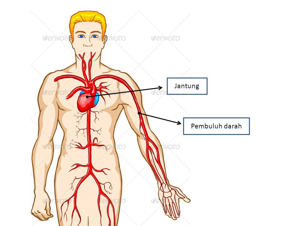 Jantung Pembuluh darah