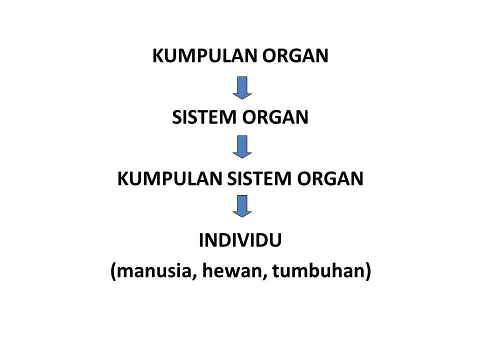 KUMPULAN ORGAN SISTEM ORGAN KUMPULAN SISTEM ORGAN INDIVIDU (manusia, hewan, tumbuhan)