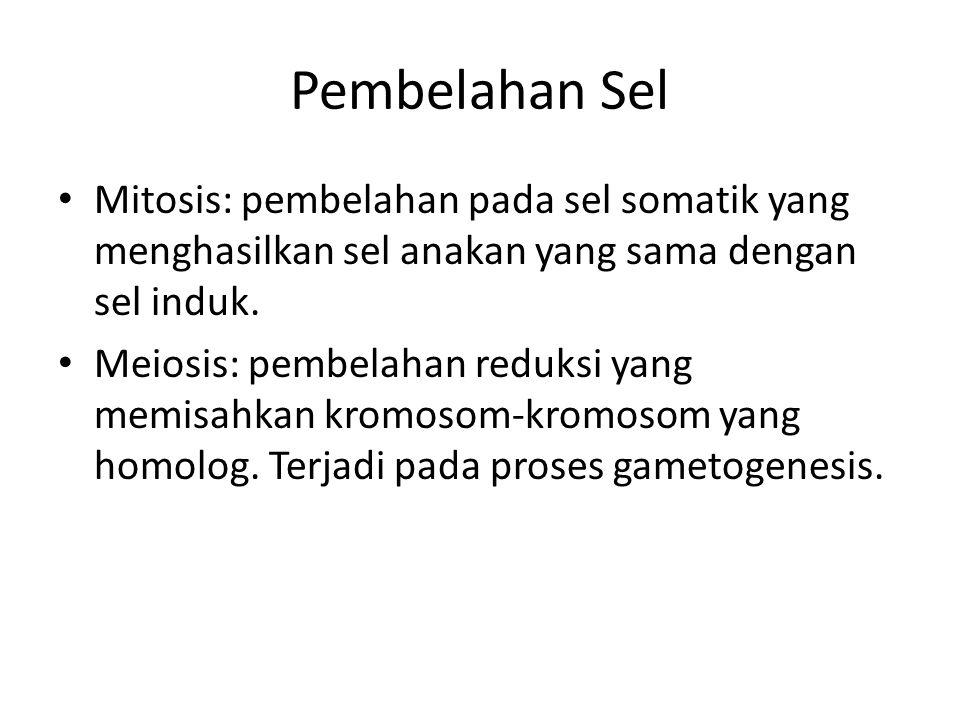 Pembelahan Sel Mitosis: pembelahan pada sel somatik yang menghasilkan sel anakan yang sama dengan sel induk. Meiosis: pembelahan reduksi yang memisahk