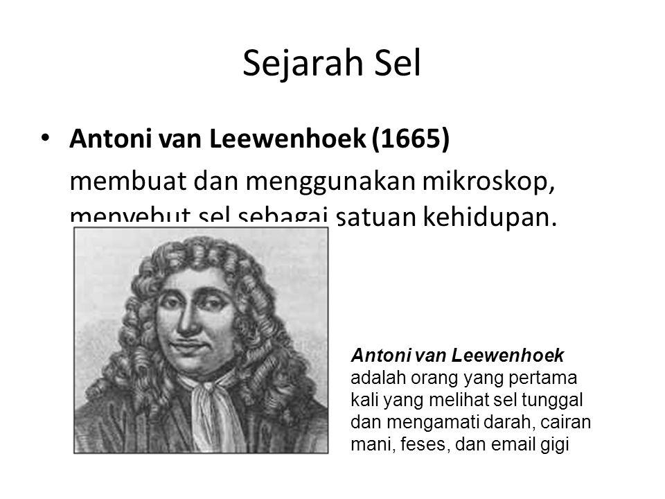 Sejarah Sel Antoni van Leewenhoek (1665) membuat dan menggunakan mikroskop, menyebut sel sebagai satuan kehidupan. Antoni van Leewenhoek adalah orang