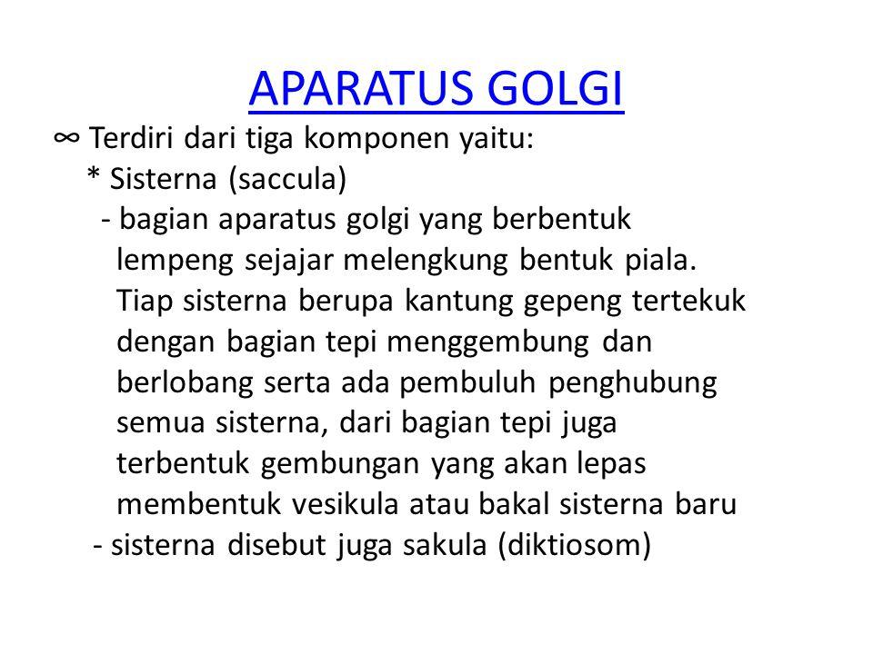 APARATUS GOLGI ∞ Terdiri dari tiga komponen yaitu: * Sisterna (saccula) - bagian aparatus golgi yang berbentuk lempeng sejajar melengkung bentuk piala