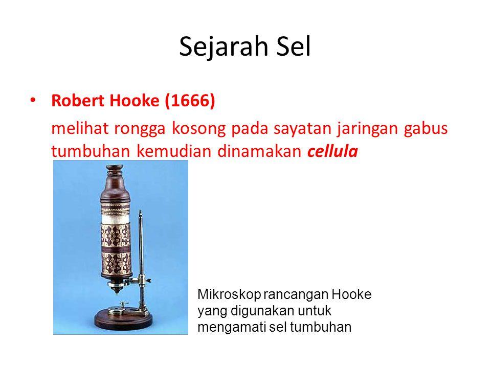 SEJARAH PENEMUAN SEL Robert Hooke ( seorang ahli matematika dan fisika Inggris) tahun 1665 pada pengamatannya terhadap gabus dari kulit pohon Quecus suber terlihat ruangan- ruangan kosong dan kecil yang diberi istilah sel Pada tahun 1835 Felix Dujardin menemukan bahwa di dalam sel yang hidup tidak kosong melainkan terdapat substansi cair.