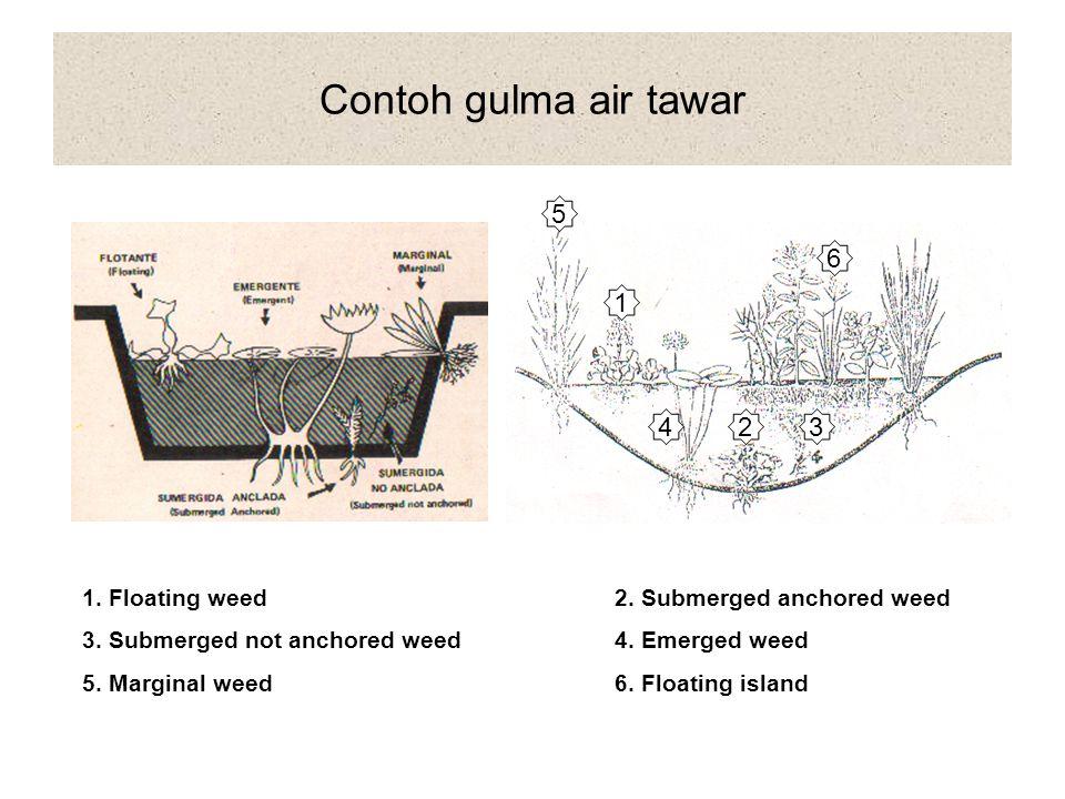 2.HABITAT a. Gulma darat (terrestrial weed) Amaranthus spinosus, Cyperus rotundus b.