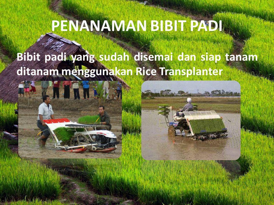 PENANAMAN BIBIT PADI Bibit padi yang sudah disemai dan siap tanam ditanam menggunakan Rice Transplanter