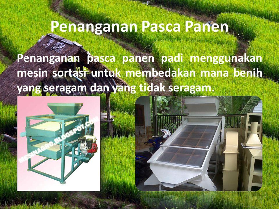 Penanganan Pasca Panen Penanganan pasca panen padi menggunakan mesin sortasi untuk membedakan mana benih yang seragam dan yang tidak seragam.