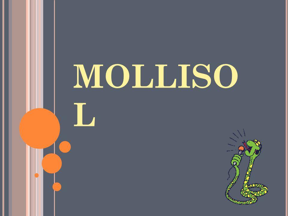 MOLLISO L