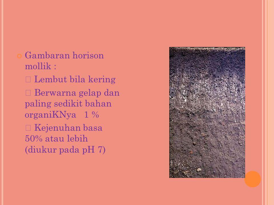Gambaran horison mollik :  Lembut bila kering  Berwarna gelap dan paling sedikit bahan organiKNya 1 %  Kejenuhan basa 50% atau lebih (diukur pada p