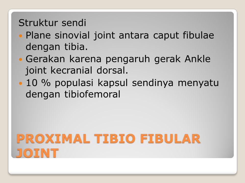 PROXIMAL TIBIO FIBULAR JOINT Struktur sendi Plane sinovial joint antara caput fibulae dengan tibia. Gerakan karena pengaruh gerak Ankle joint kecrania