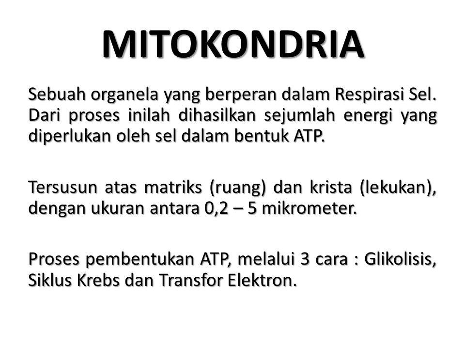 MITOKONDRIA Sebuah organela yang berperan dalam Respirasi Sel. Dari proses inilah dihasilkan sejumlah energi yang diperlukan oleh sel dalam bentuk ATP