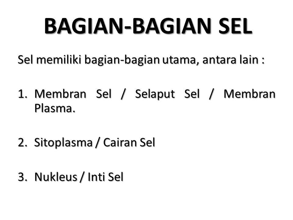 BAGIAN-BAGIAN SEL Sel memiliki bagian-bagian utama, antara lain : 1.Membran Sel / Selaput Sel / Membran Plasma. 2.Sitoplasma / Cairan Sel 3.Nukleus /
