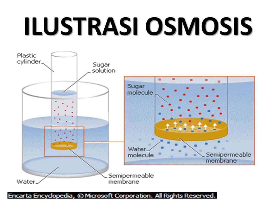 ILUSTRASI OSMOSIS