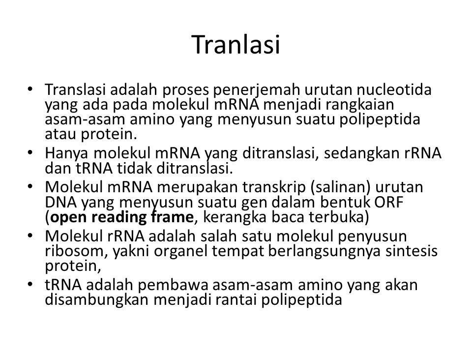Tranlasi Translasi adalah proses penerjemah urutan nucleotida yang ada pada molekul mRNA menjadi rangkaian asam-asam amino yang menyusun suatu polipeptida atau protein.