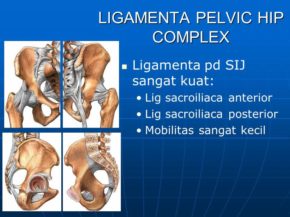 LIGAMENTA Lig Longit posterior kaya capilair dan aff IV/C fibre, pd L5 menyempit, Lig Longit posterior kaya capilair dan aff IV/C fibre, pd L5 menyemp
