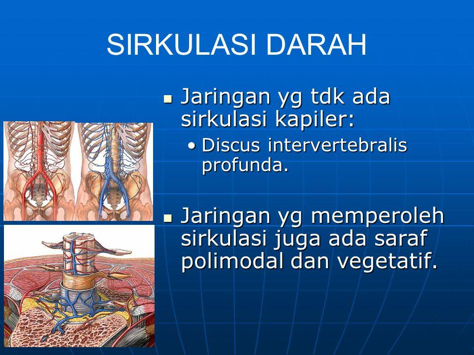 PERSARAFAN Saraf -somatik segmental (Dermatome, Myotome, sklerotome) –Motorik, sensorik, vegetatif –Segment Junghann oleh n. sinuvertebral kaya aff. I