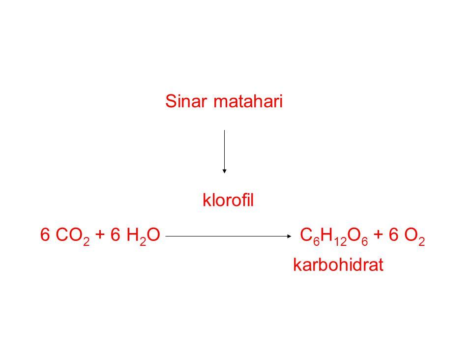Sinar matahari klorofil 6 CO 2 + 6 H 2 O C 6 H 12 O 6 + 6 O 2 karbohidrat