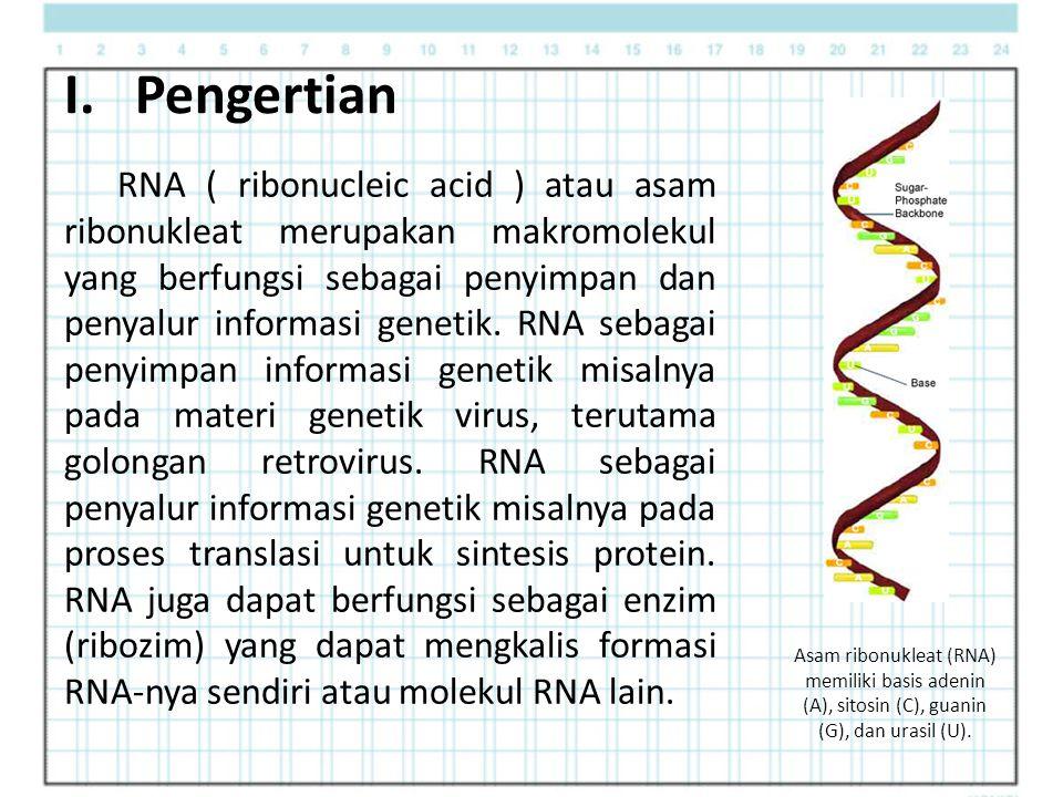 I. Pengertian RNA ( ribonucleic acid ) atau asam ribonukleat merupakan makromolekul yang berfungsi sebagai penyimpan dan penyalur informasi genetik. R