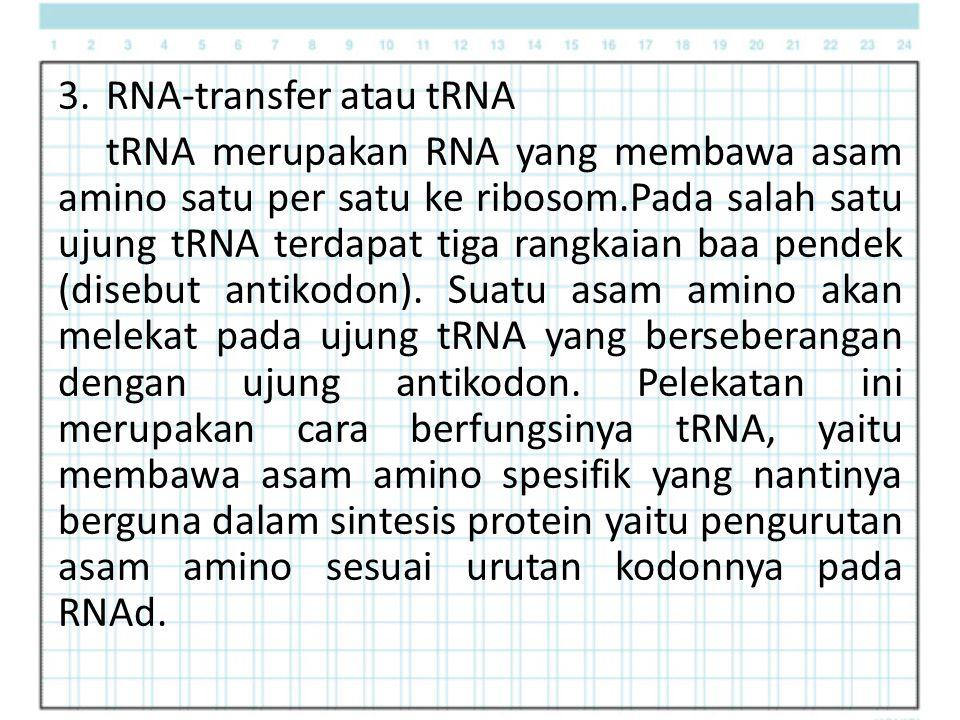 3.RNA-transfer atau tRNA tRNA merupakan RNA yang membawa asam amino satu per satu ke ribosom.Pada salah satu ujung tRNA terdapat tiga rangkaian baa pendek (disebut antikodon).