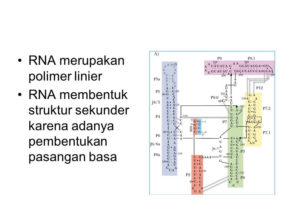RNA merupakan polimer linier RNA membentuk struktur sekunder karena adanya pembentukan pasangan basa