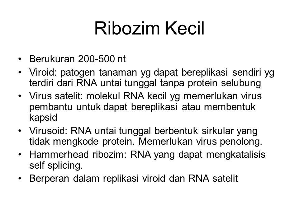 Ribozim Kecil Berukuran 200-500 nt Viroid: patogen tanaman yg dapat bereplikasi sendiri yg terdiri dari RNA untai tunggal tanpa protein selubung Virus