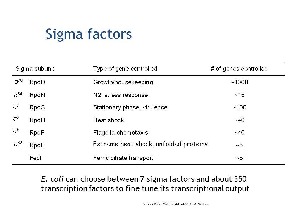 Sigma factors E. coli can choose between 7 sigma factors and about 350 transcription factors to fine tune its transcriptional output An Rev Micro Vol.
