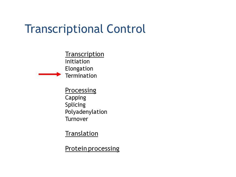 Transcriptional Control Transcription Initiation Elongation Termination Processing Capping Splicing Polyadenylation Turnover Translation Protein proce