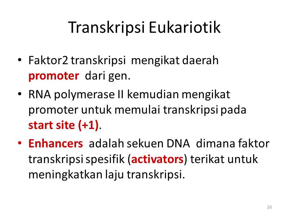 26 Transkripsi Eukariotik Faktor2 transkripsi mengikat daerah promoter dari gen. RNA polymerase II kemudian mengikat promoter untuk memulai transkrips