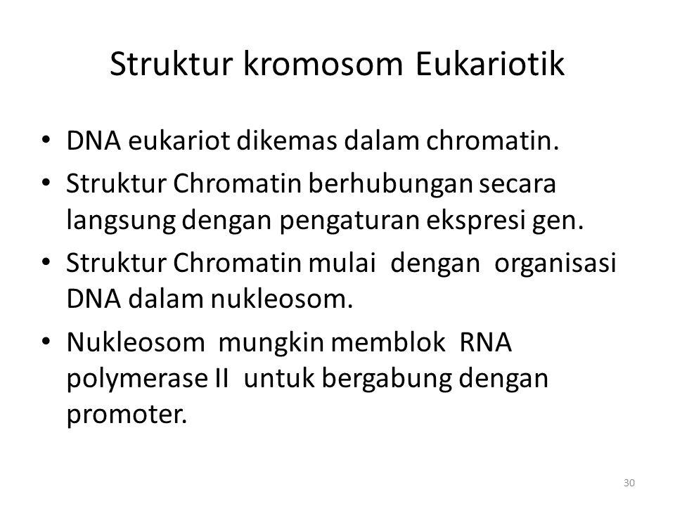 30 Struktur kromosom Eukariotik DNA eukariot dikemas dalam chromatin. Struktur Chromatin berhubungan secara langsung dengan pengaturan ekspresi gen. S