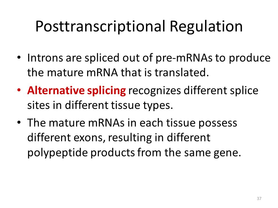 37 Posttranscriptional Regulation Introns are spliced out of pre-mRNAs to produce the mature mRNA that is translated. Alternative splicing recognizes