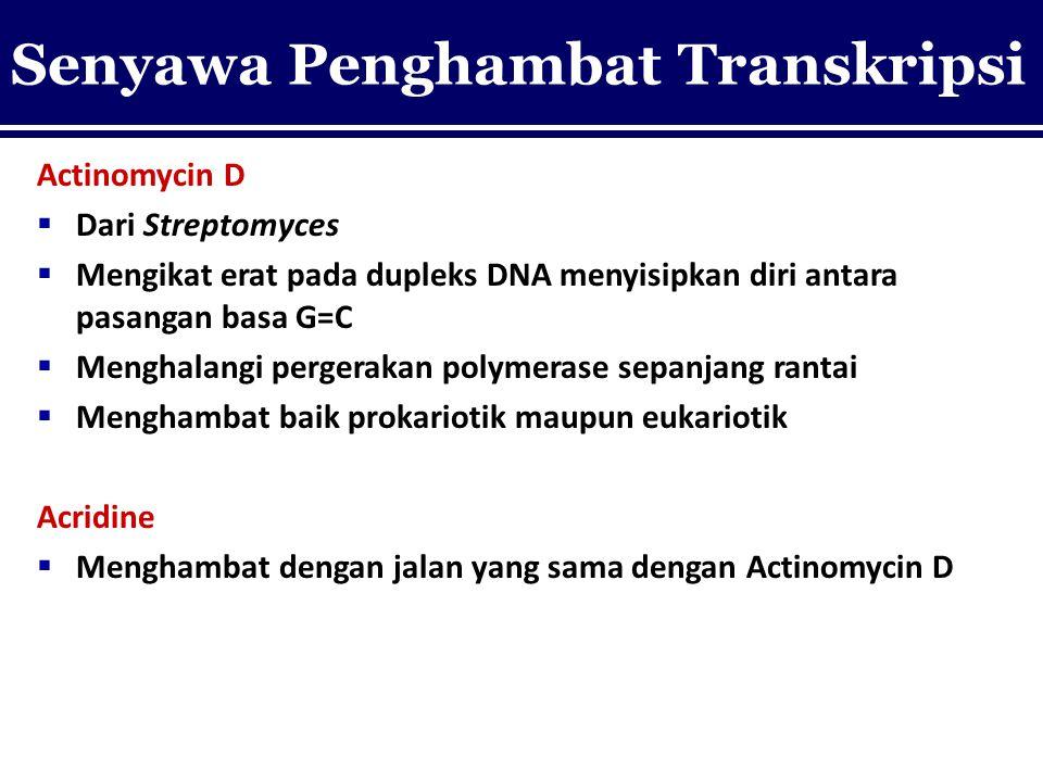 Actinomycin D  Dari Streptomyces  Mengikat erat pada dupleks DNA menyisipkan diri antara pasangan basa G=C  Menghalangi pergerakan polymerase sepan