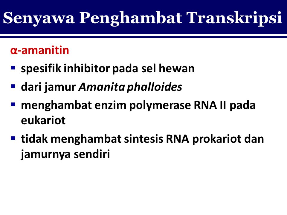 α-amanitin  spesifik inhibitor pada sel hewan  dari jamur Amanita phalloides  menghambat enzim polymerase RNA II pada eukariot  tidak menghambat s