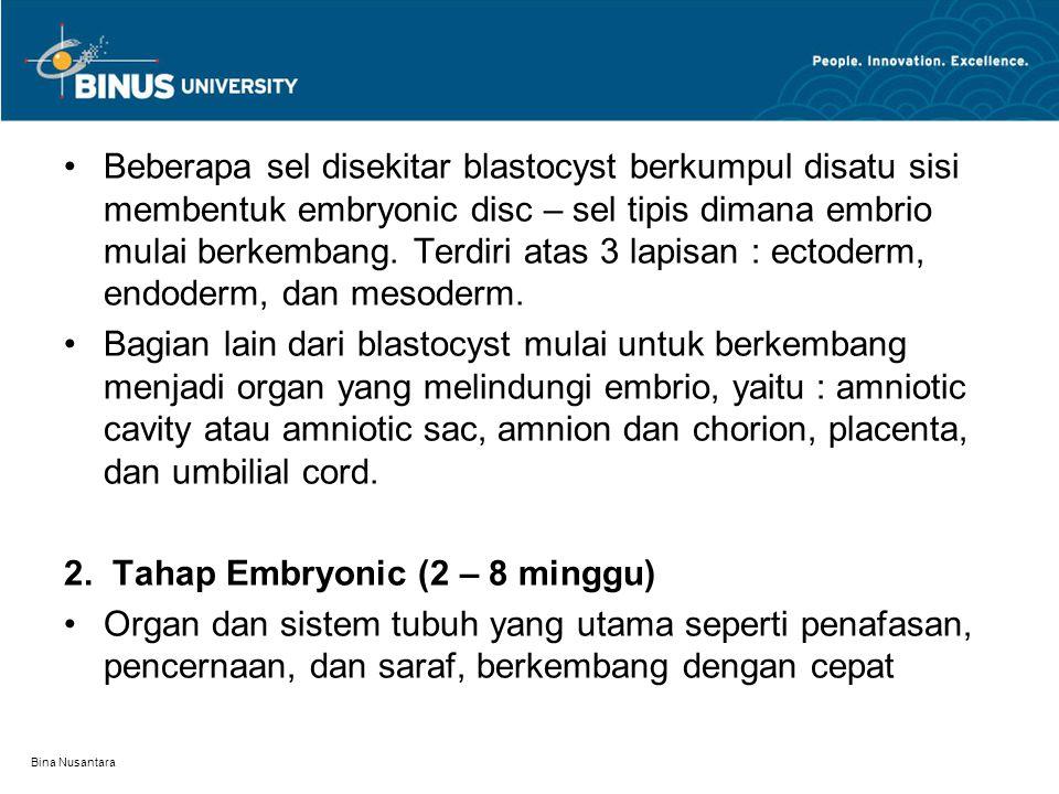 Bina Nusantara Beberapa sel disekitar blastocyst berkumpul disatu sisi membentuk embryonic disc – sel tipis dimana embrio mulai berkembang. Terdiri at