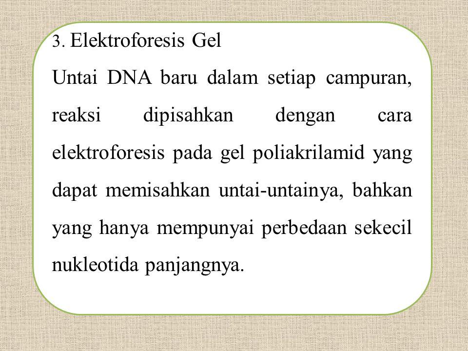 3. Elektroforesis Gel Untai DNA baru dalam setiap campuran, reaksi dipisahkan dengan cara elektroforesis pada gel poliakrilamid yang dapat memisahkan