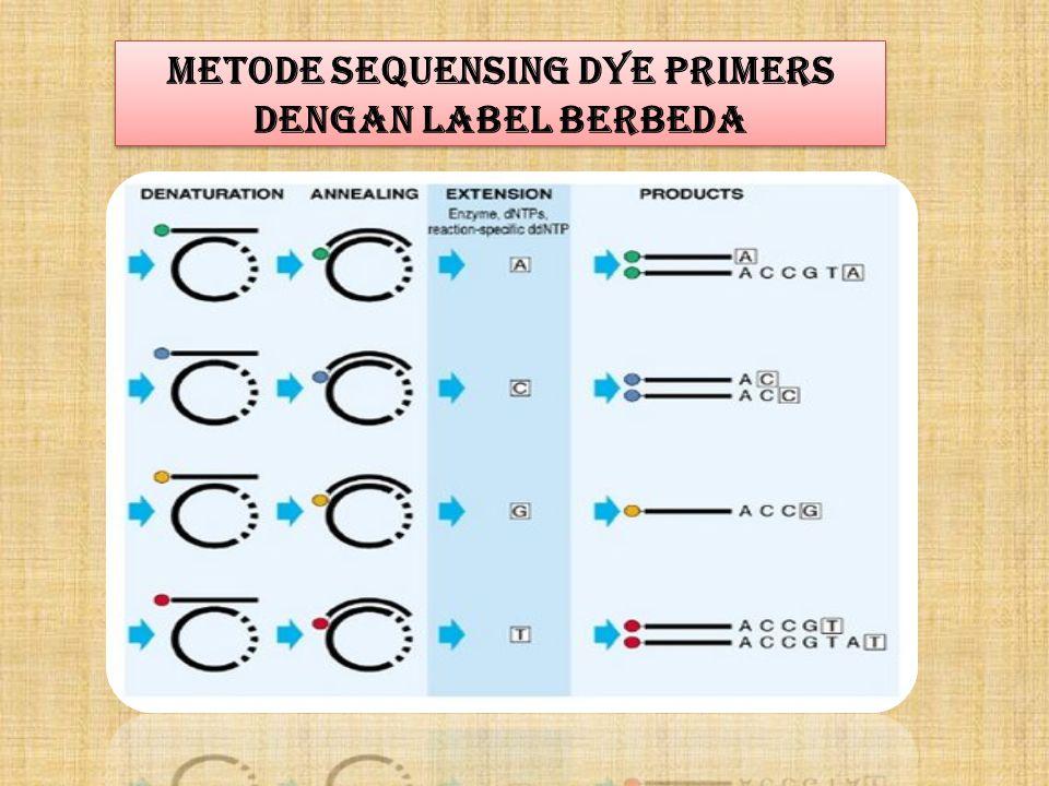 Metode sequensing Dye Primers dengan Label Berbeda