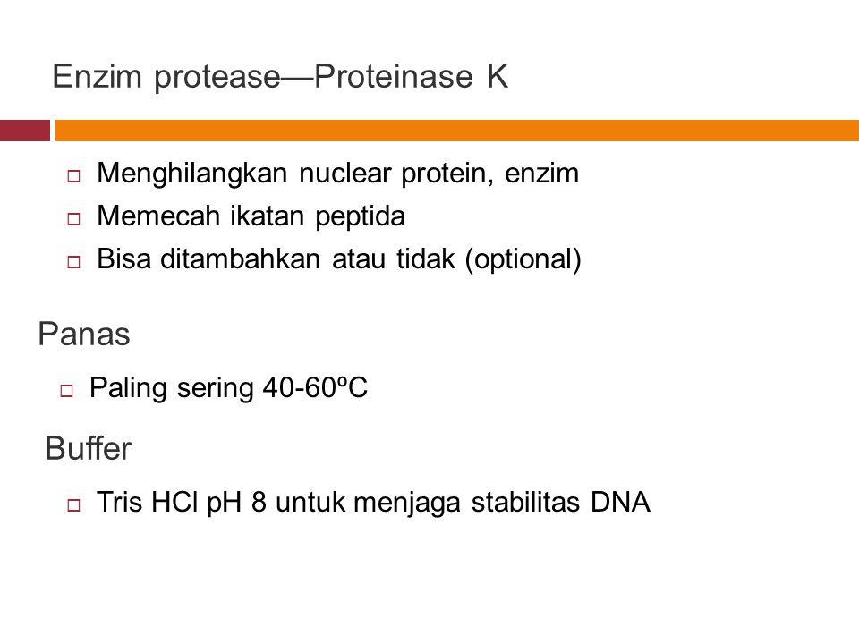 Enzim protease—Proteinase K  Menghilangkan nuclear protein, enzim  Memecah ikatan peptida  Bisa ditambahkan atau tidak (optional) Panas  Paling se