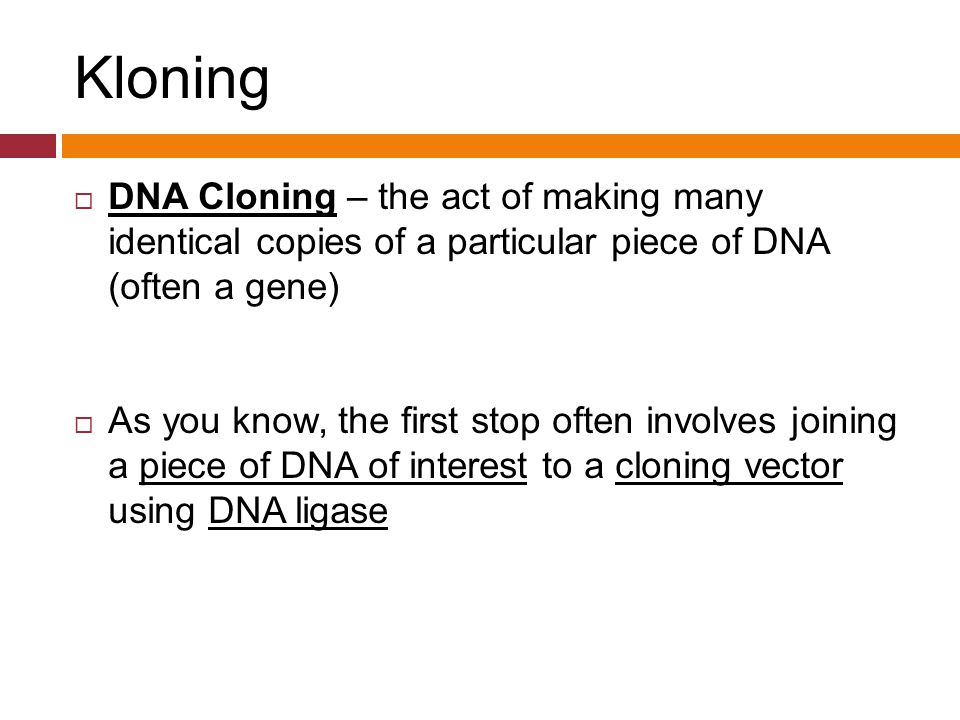 Kloning  DNA Cloning – the act of making many identical copies of a particular piece of DNA (often a gene)  As you know, the first stop often involv